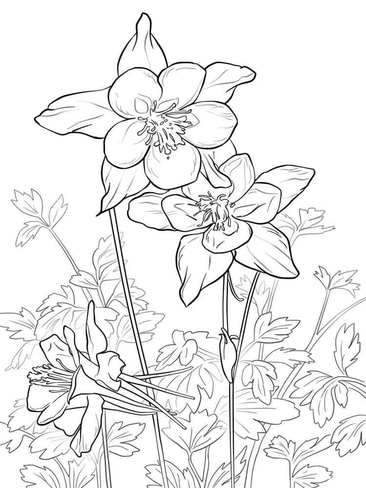 Columbine Flowers coloring pages
