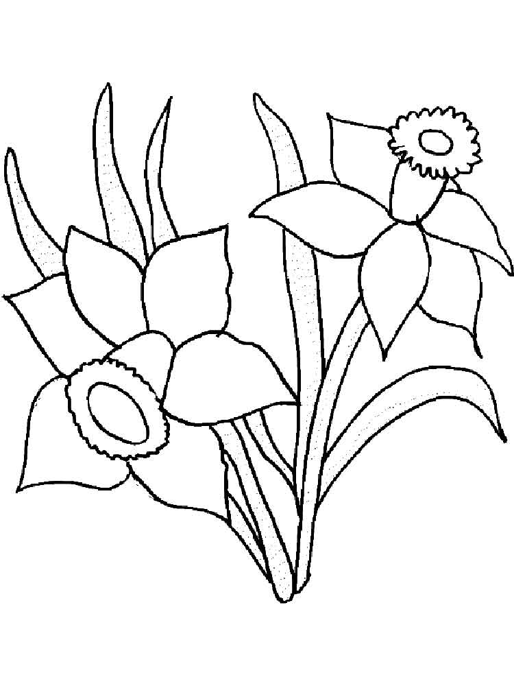 daffodil flower coloring pages 11