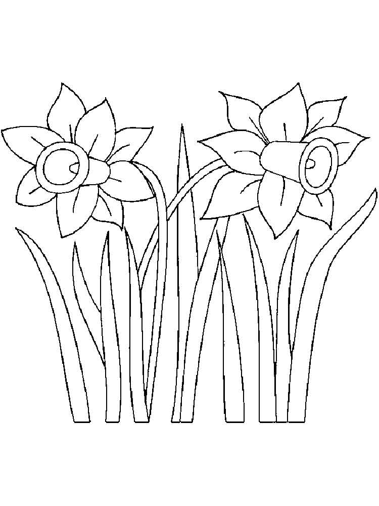Daffodil coloring pages Download