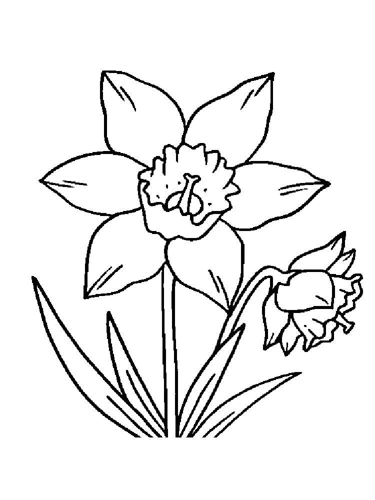 flower coloring pages and facts - photo#15