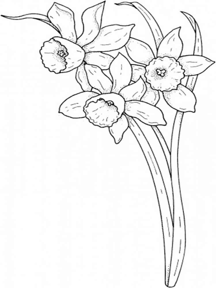 Daffodil Coloring Pages Download And Print Daffodil