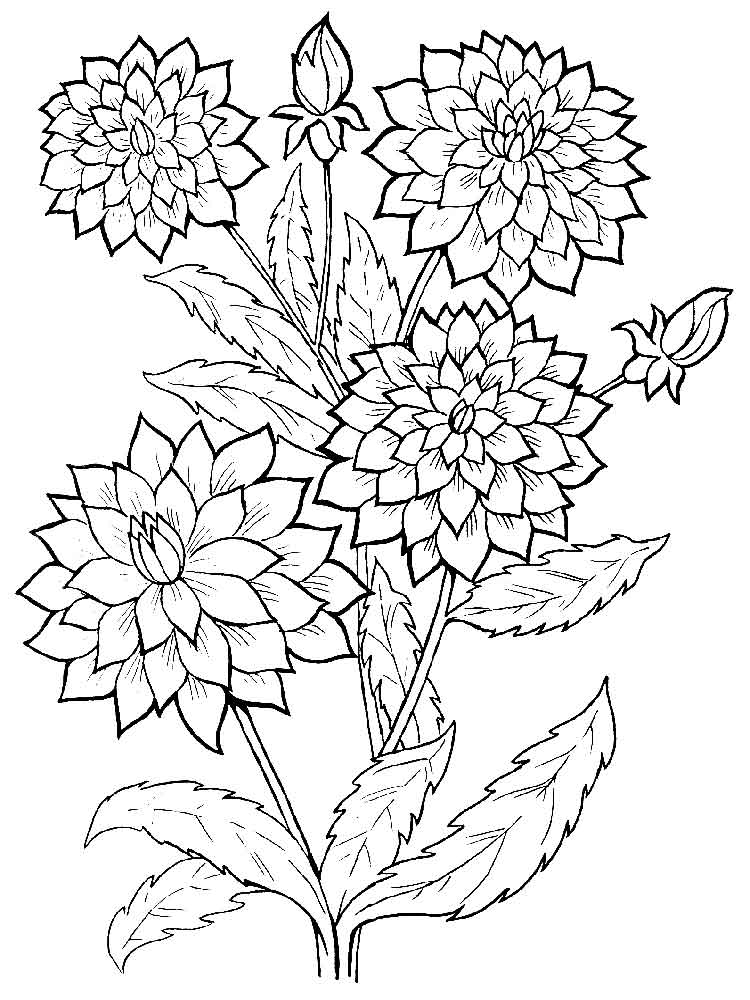 Galerry dahlia flower coloring pages