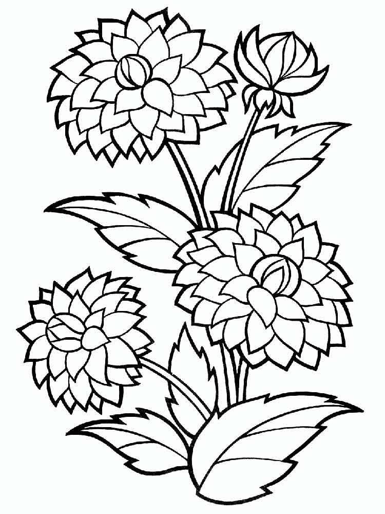 Dahlia Flower coloring pages. Download and print Dahlia Flower ...