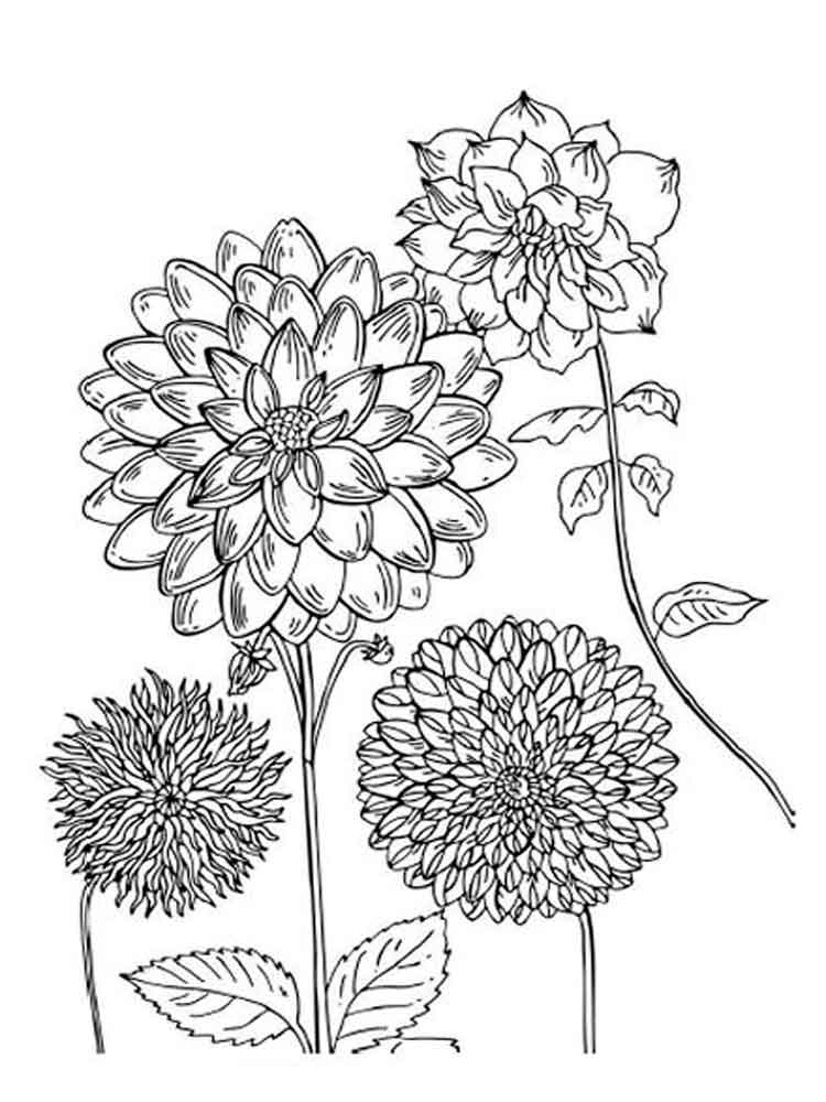 Dahlia Flower Coloring Pages Download And Print Dahlia