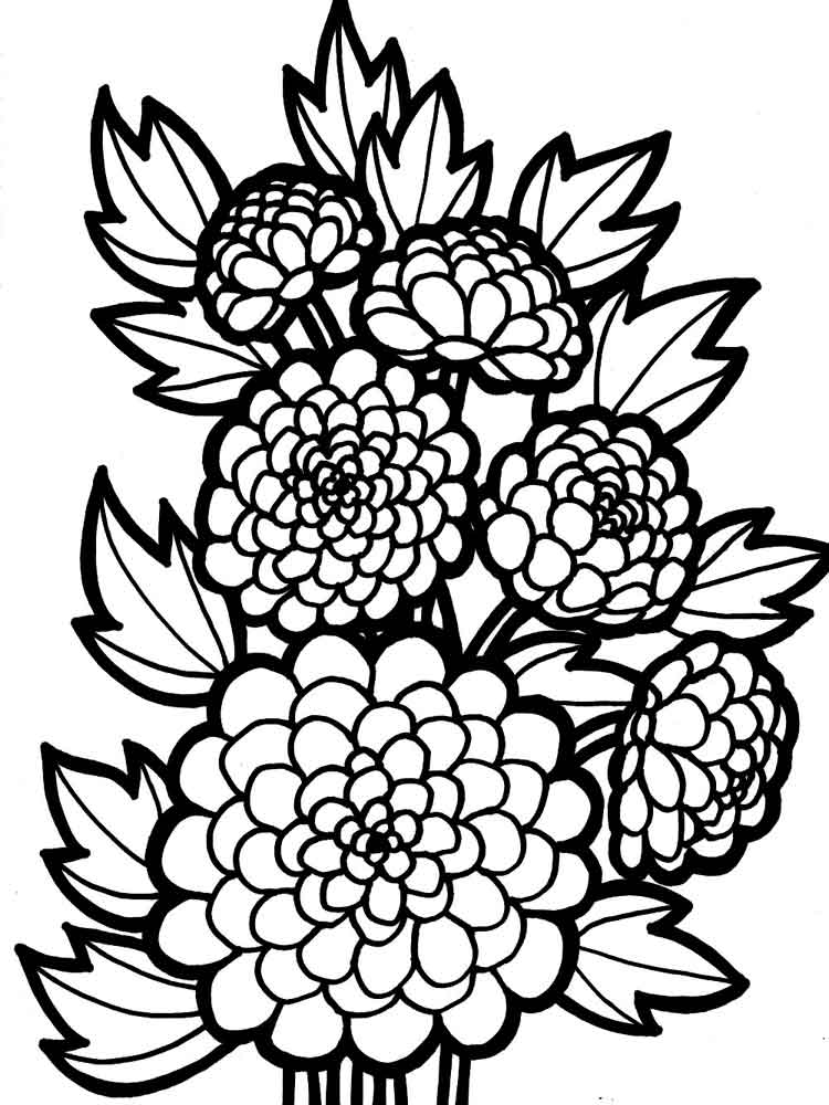 Dahlia flower coloring pages download and print dahlia for Buttercup flower coloring pages