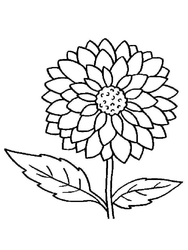 Dahlia Flower coloring pages Download