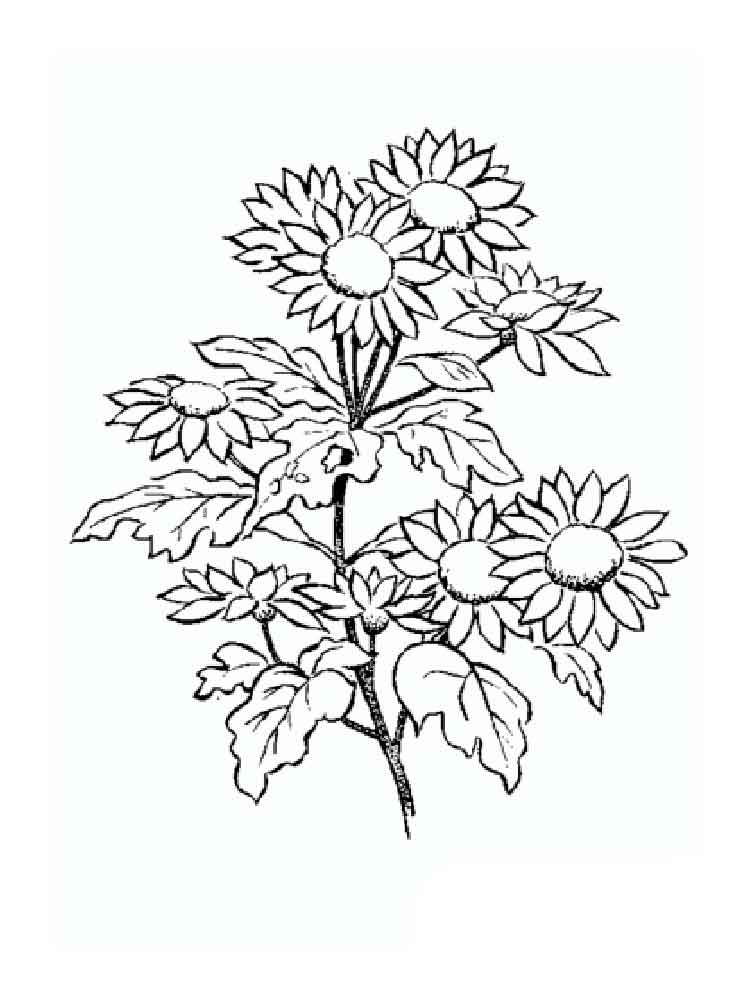 Daisy Flower coloring pages Download and print Daisy Flower