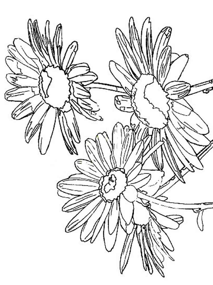 Daisy flower coloring pages download and print daisy for Daisy coloring page