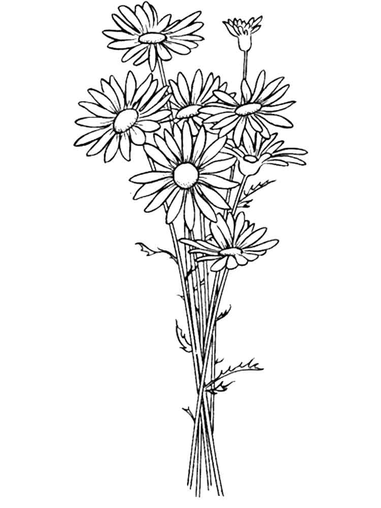 Daisy Flower Coloring Pages 3