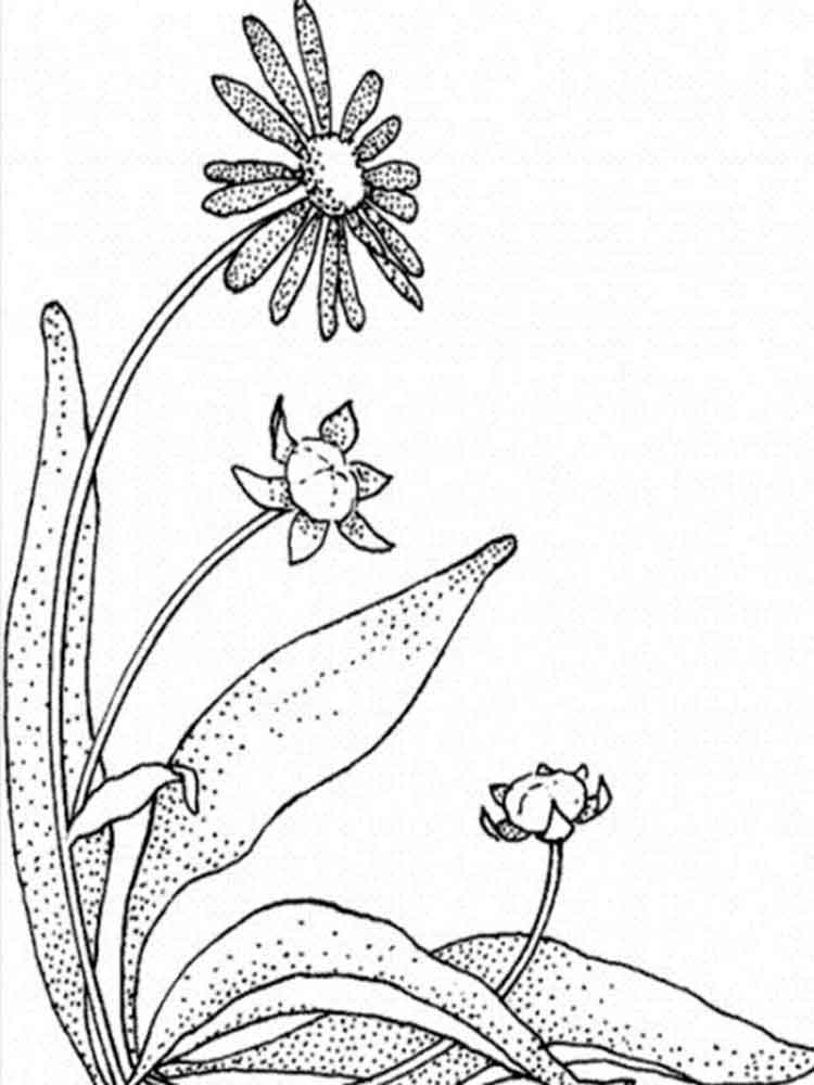 Daisy Flower coloring pages Download