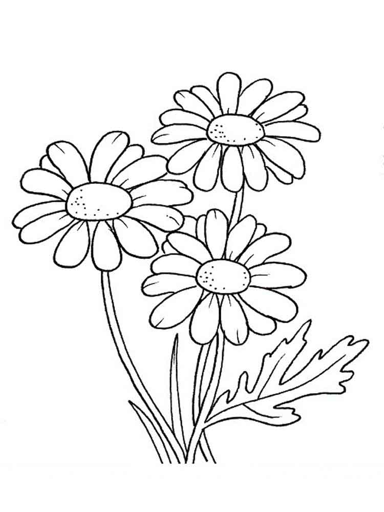 daisy flower coloring pages. download and print daisy flower, Beautiful flower