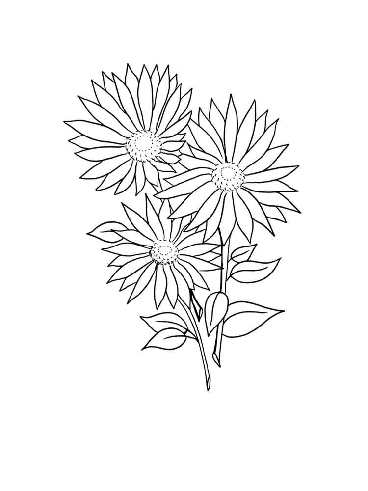 Daisy Flower coloring pages. Download and print Daisy ...