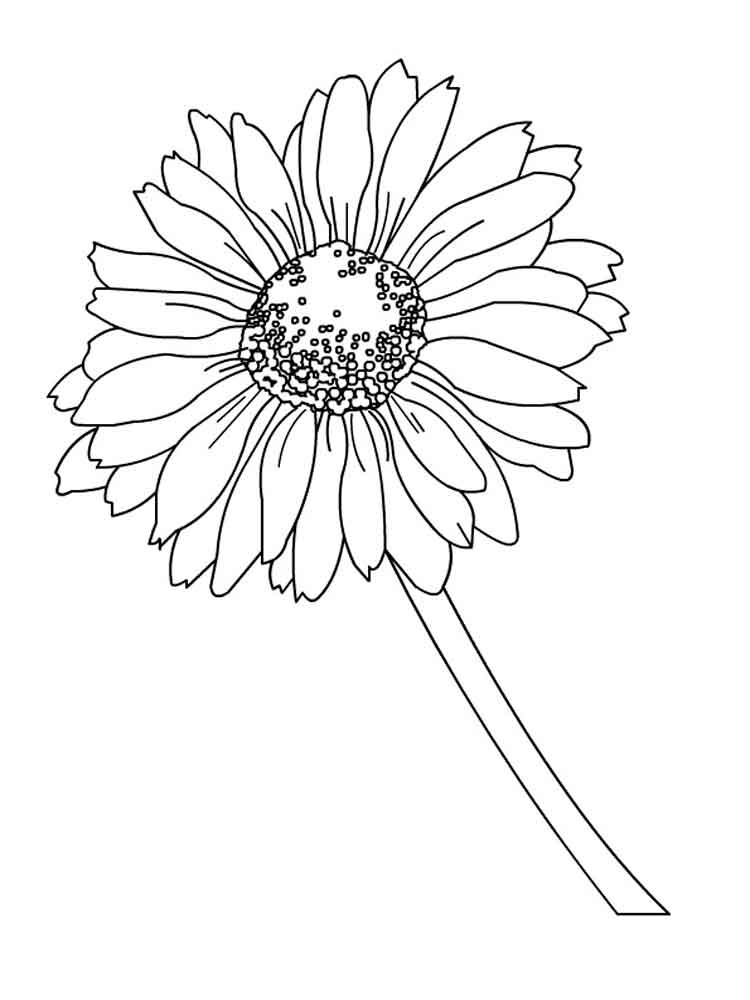 ... Daisy Flower Coloring Pages 9