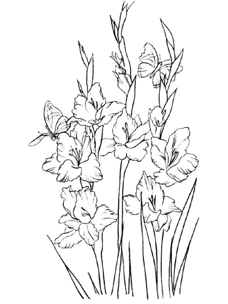 gladiolus flower coloring pages 11