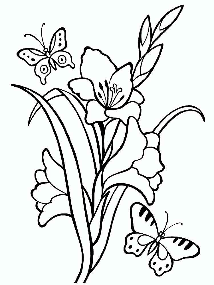 Gladiolus Coloring Pages Download And Print Gladiolus