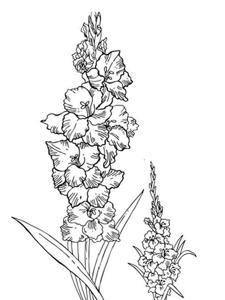 larkspur coloring pages - photo#7