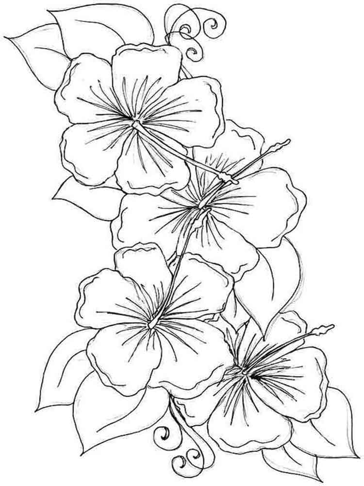 Hibiscus Flower coloring pages. Download and print ...