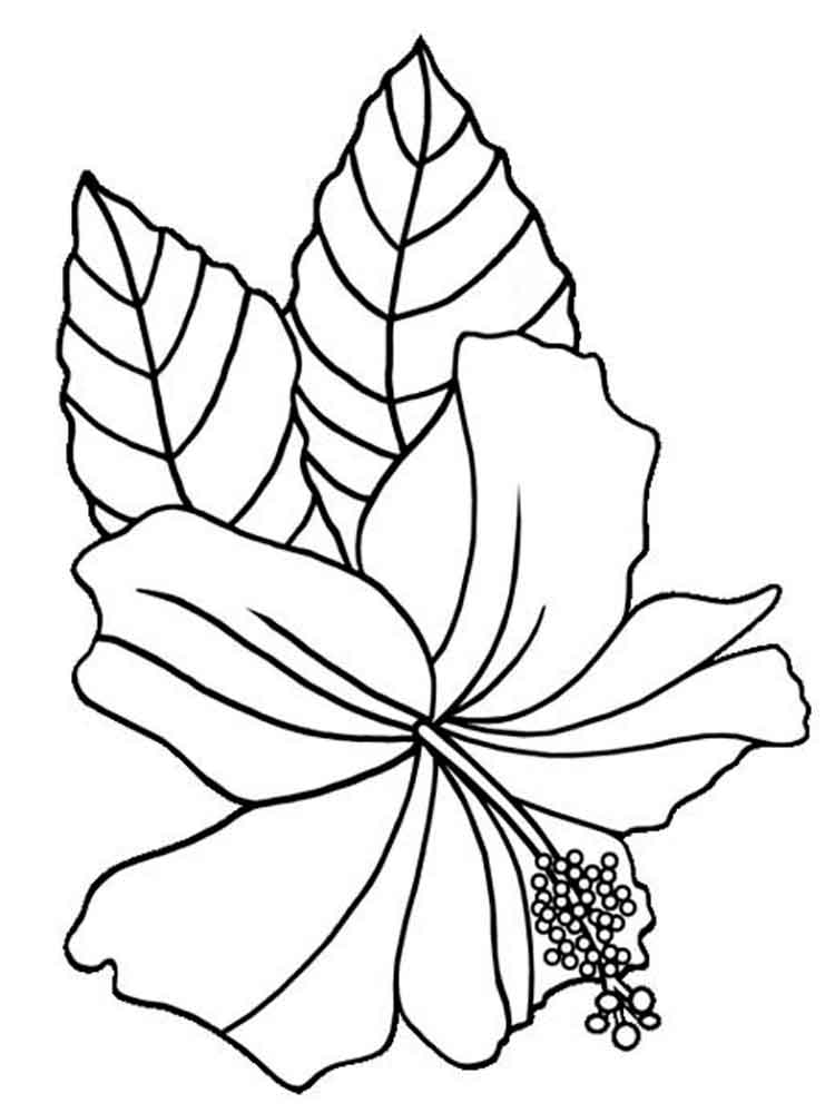 Hibiscus Flower Coloring Pages Download And Print