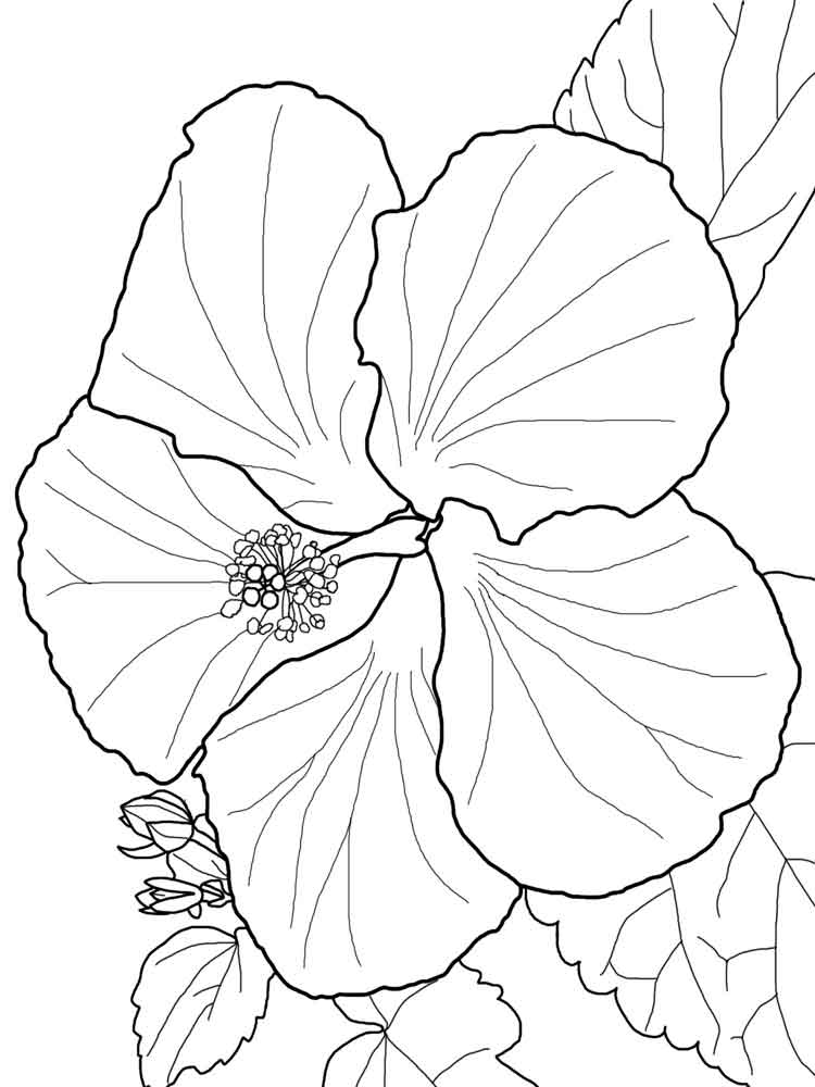 Excellent Hibiscus Flower Coloring Pages With Hibiscus