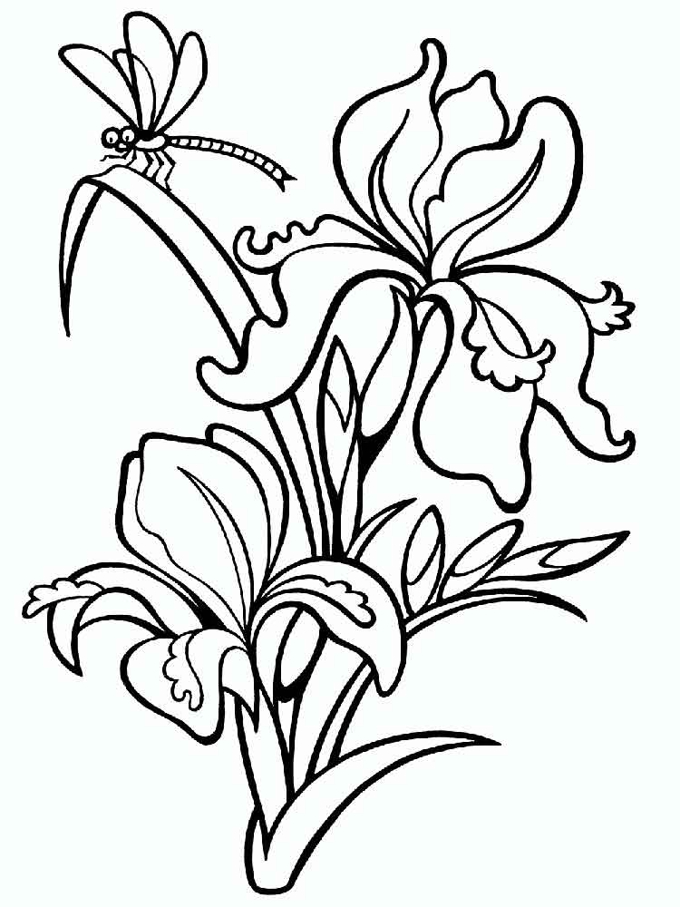 Iris Flower Coloring Pages Printable