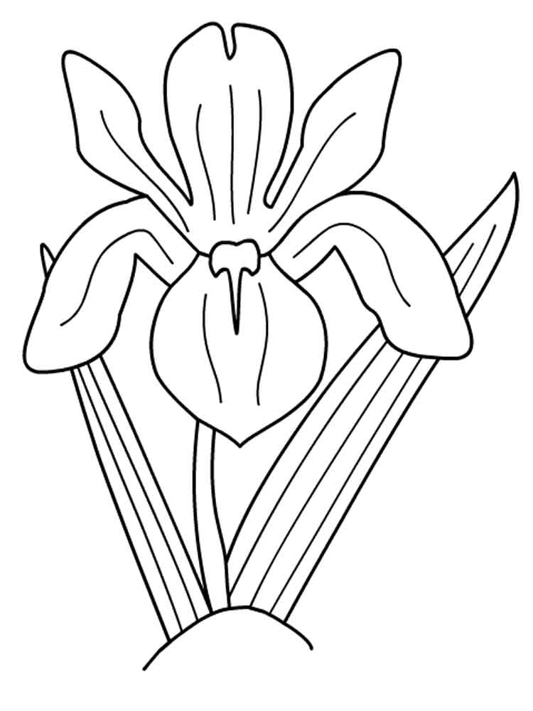 iris coloring pages - photo#25