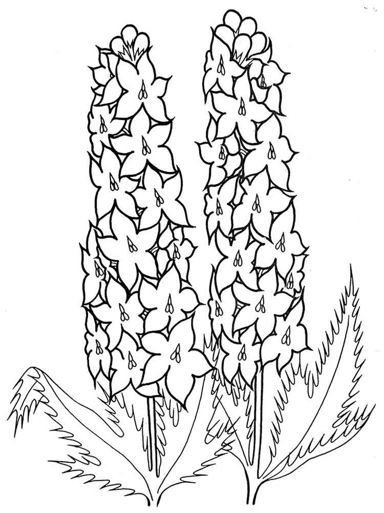 larkspur coloring pages - photo#4