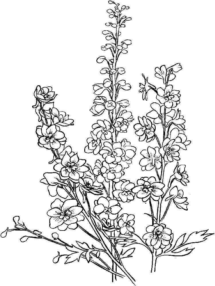Larkspur Flower Coloring Pages 3