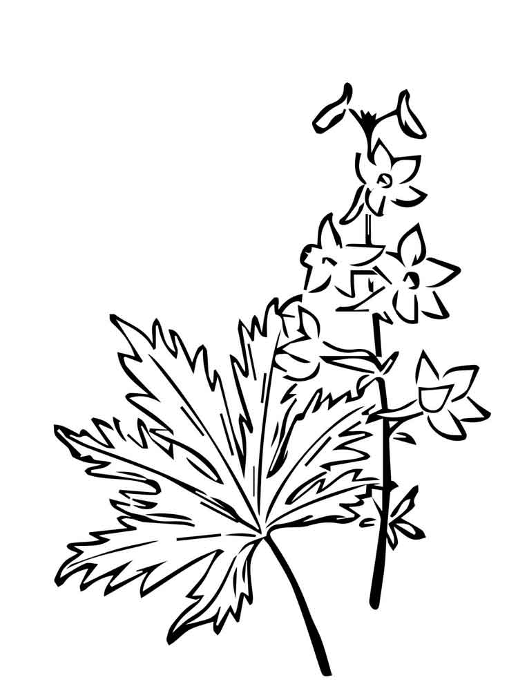 larkspur coloring pages - photo#14