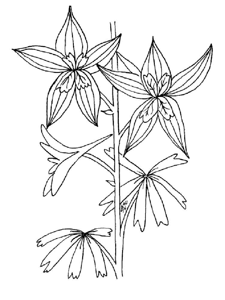 larkspur coloring pages - photo#8