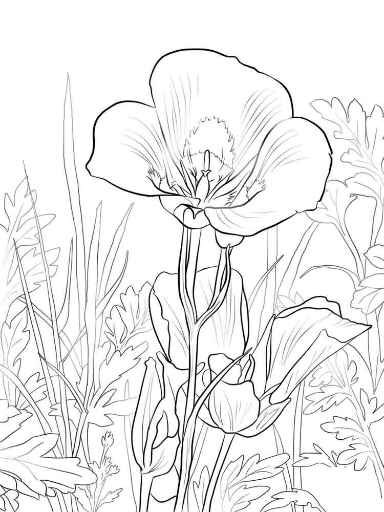 Lily Flower coloring pages Download and print Lily Flower coloring