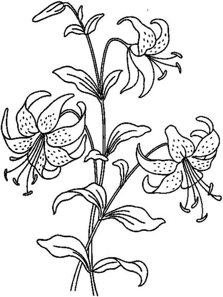 lilies flower coloring pages 3