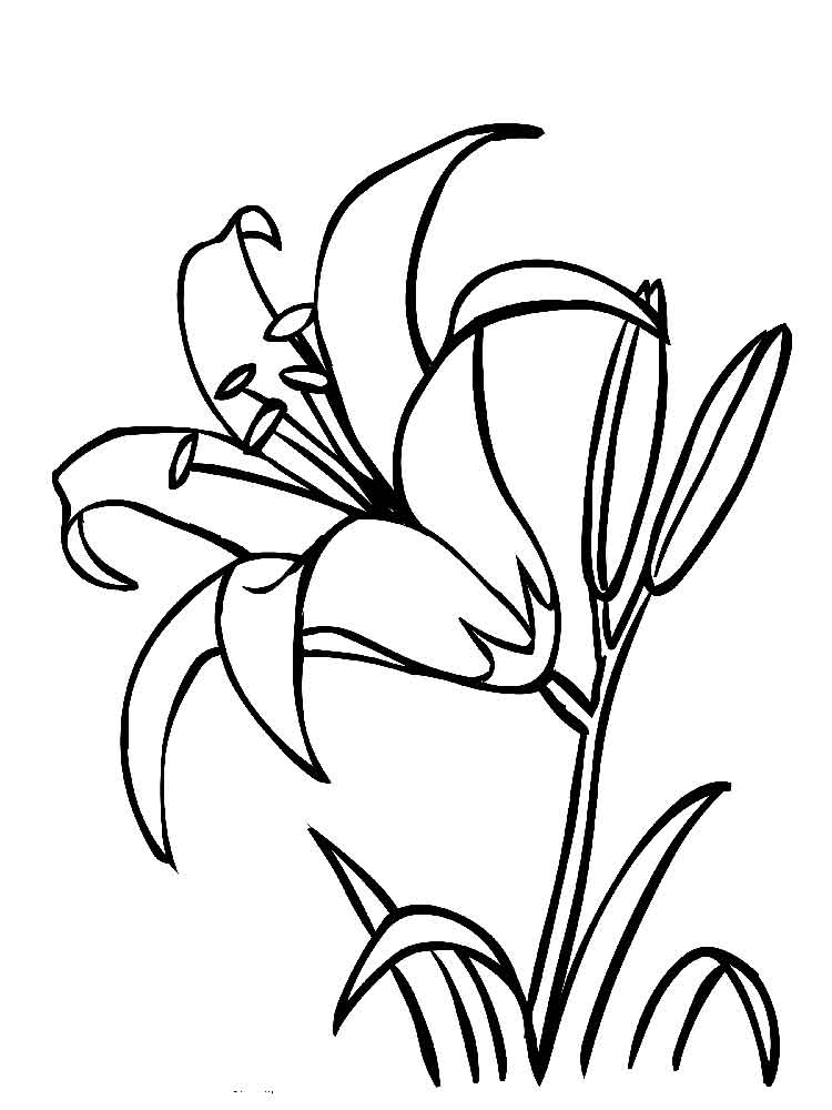 Lily Flower Coloring Pages Download And Print Lily Flower