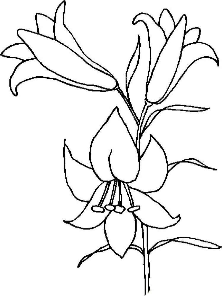 Lilies Flower Coloring Pages 6