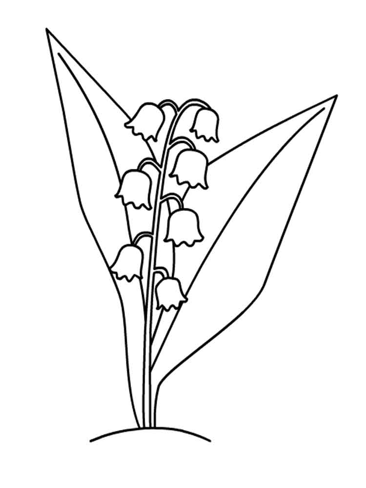 Lily of the valley coloring pages Download and print Lily