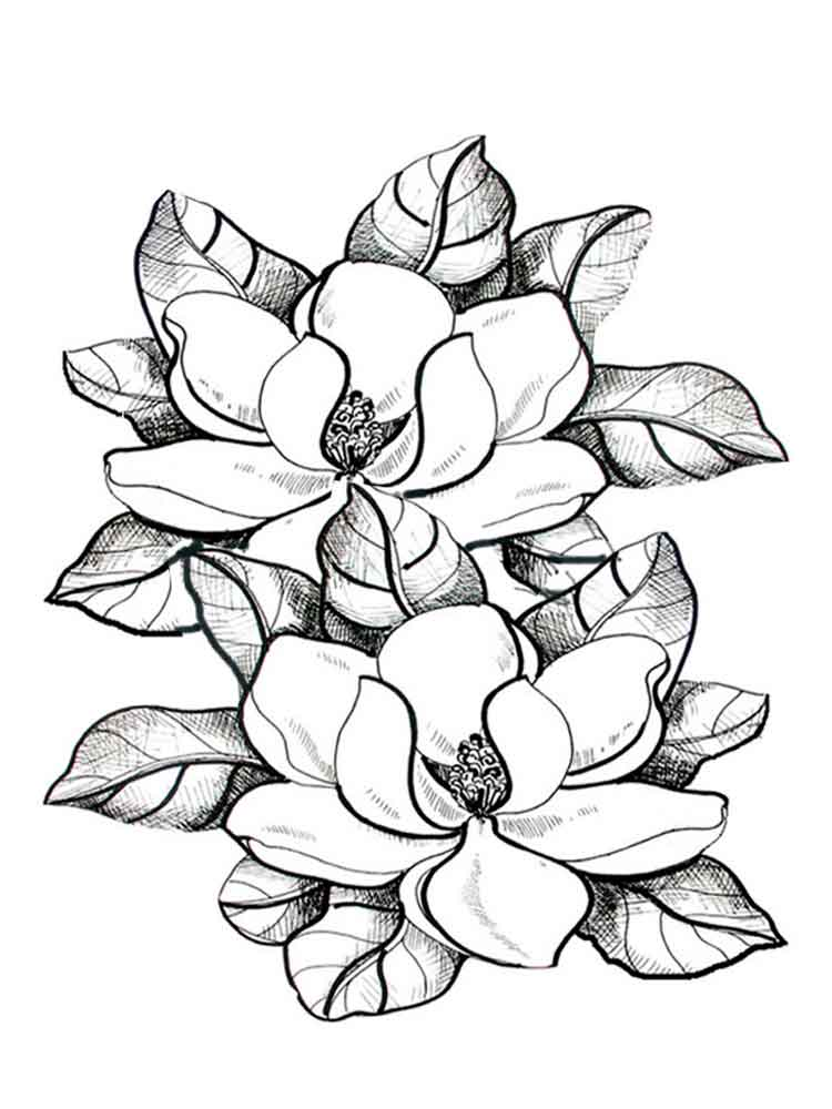 Magnolia coloring pages Download and print Magnolia coloring pages