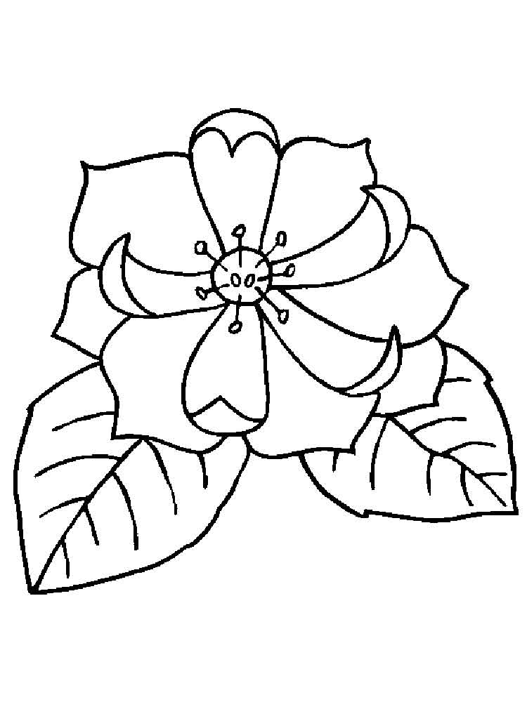 larkspur coloring pages - photo#26