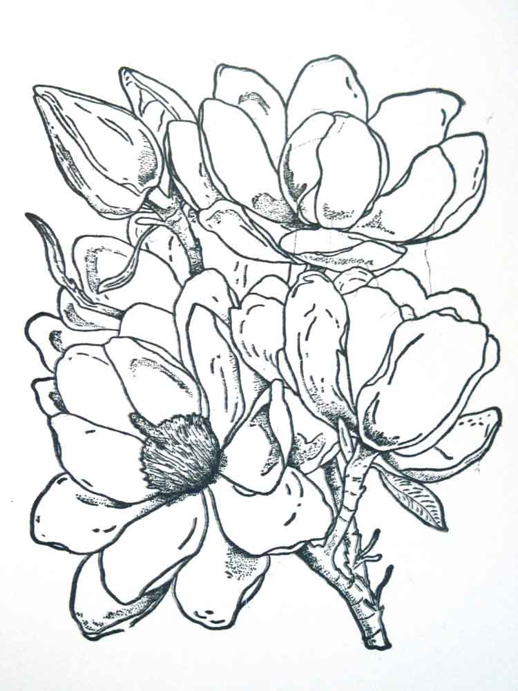 Magnolia coloring pages. Download and print Magnolia ...