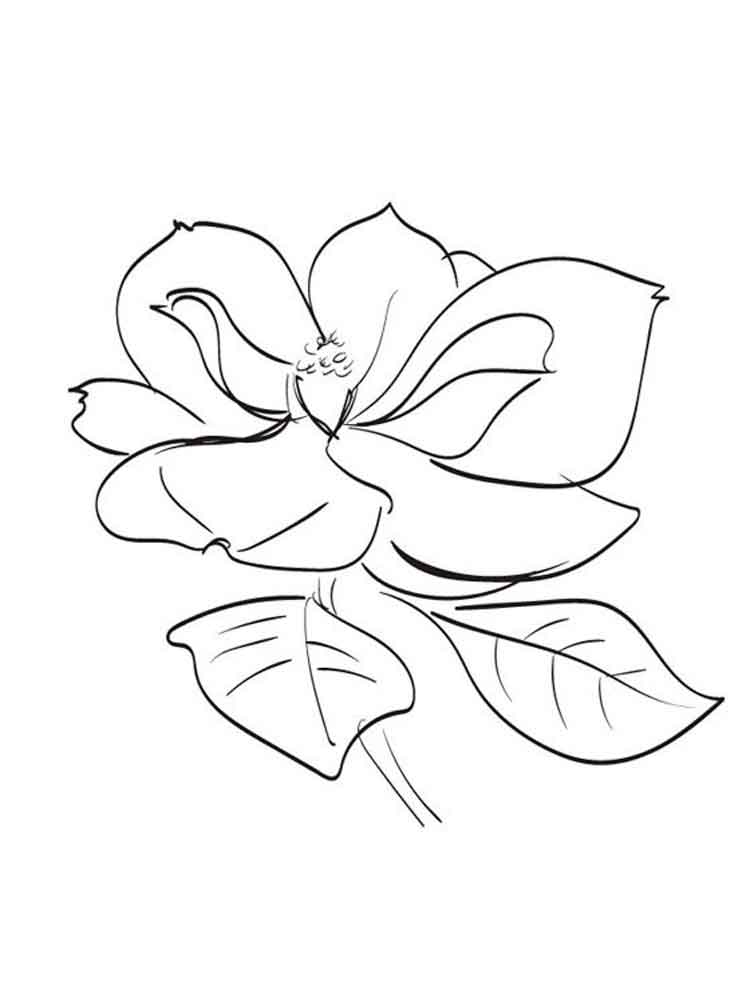 Magnolia coloring pages Download and print Magnolia