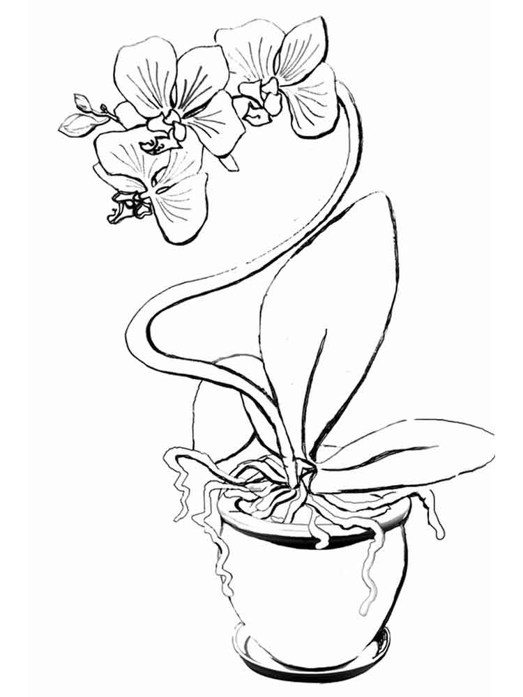 orchid flower coloring pages 1