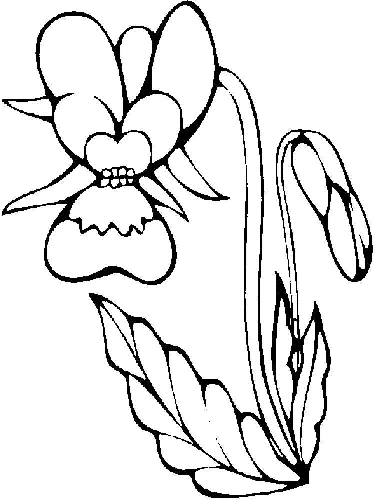 orchid flower coloring pages 11