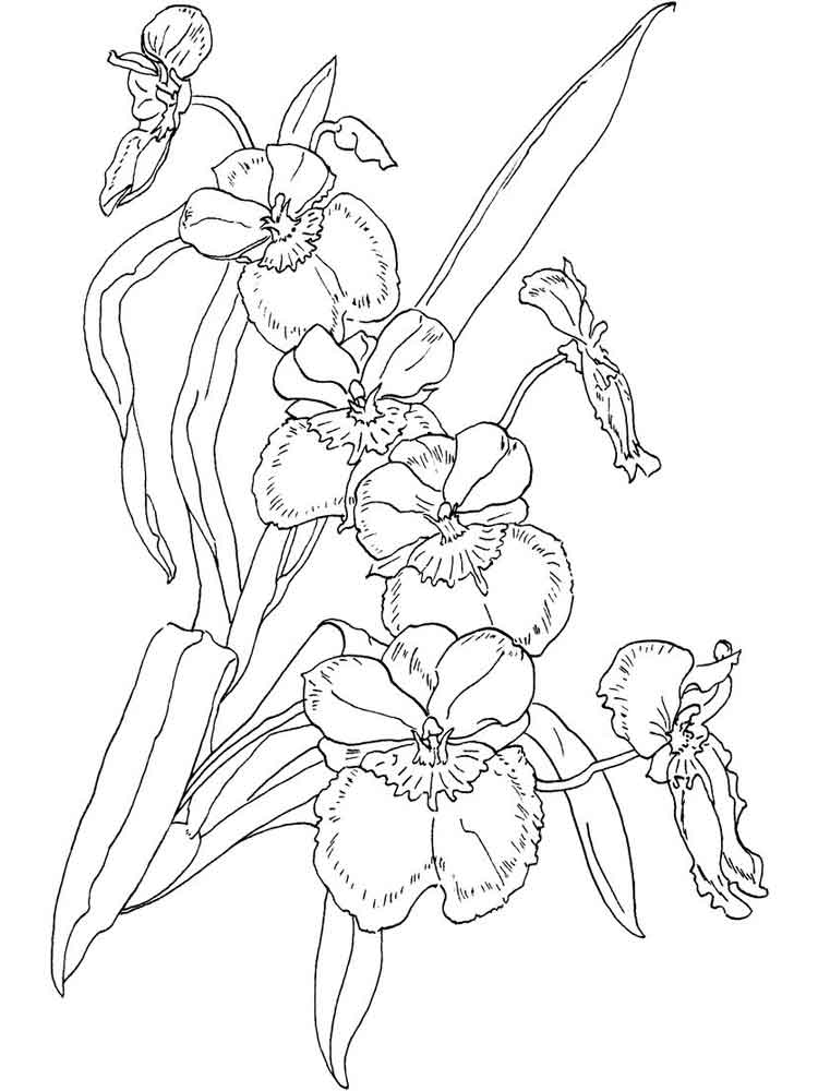 Orchid coloring pages Download