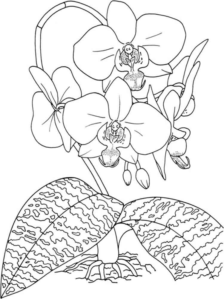 Orchid coloring pages Download and print Orchid coloring