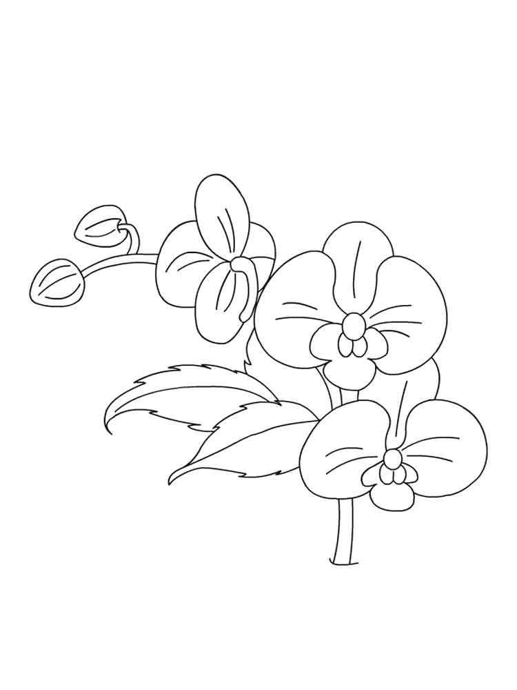 orchid coloring pages - photo#33
