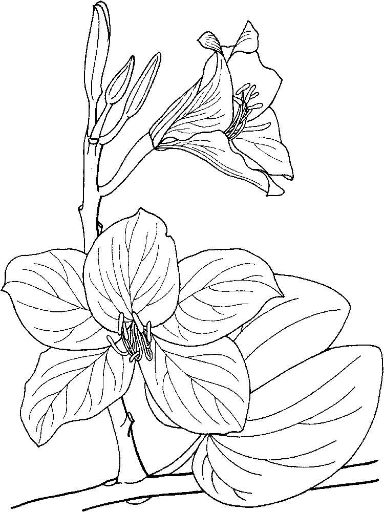 orchid flower coloring pages | Orchid coloring pages. Download and print Orchid coloring ...