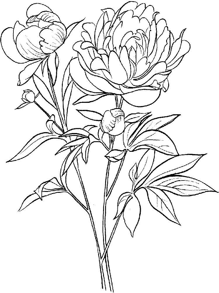 larkspur coloring pages - photo#27