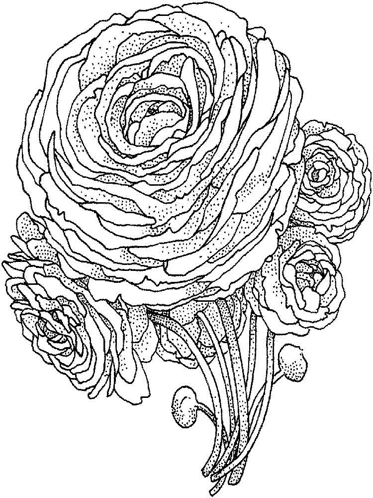 Peony Coloring Pages