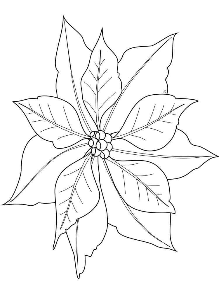 pointsettas coloring pages - photo#19