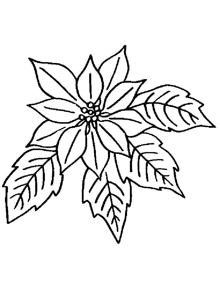 Poinsettia Flower coloring pages Download and print Poinsettia Flower coloring pages