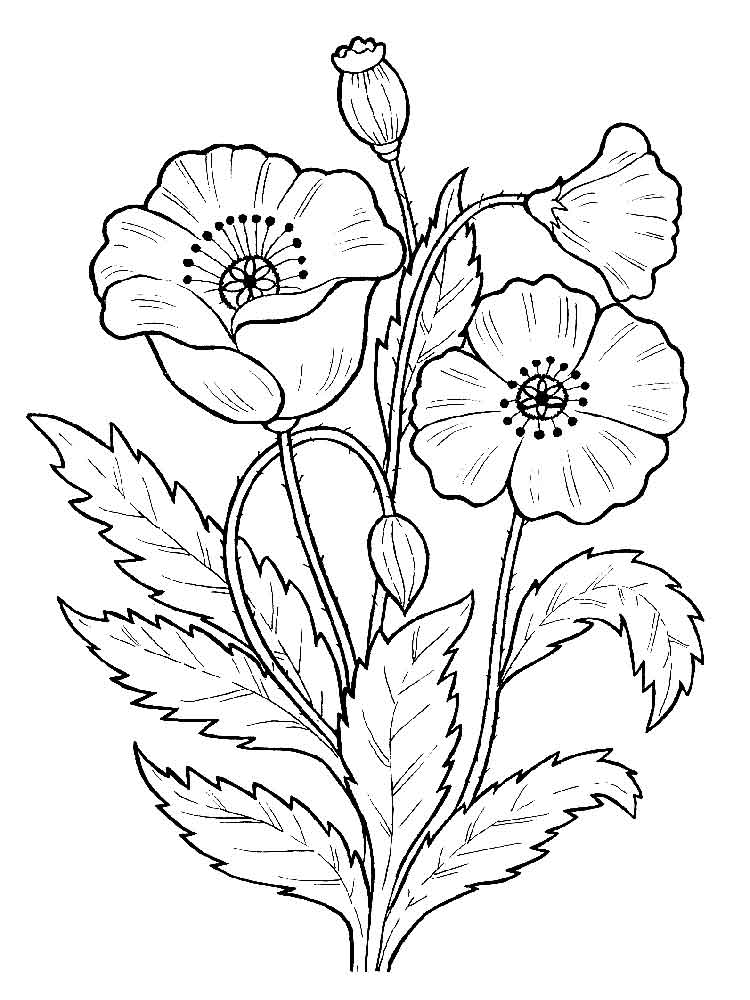 Poppy flower coloring pages download and print poppy for Poppy coloring page