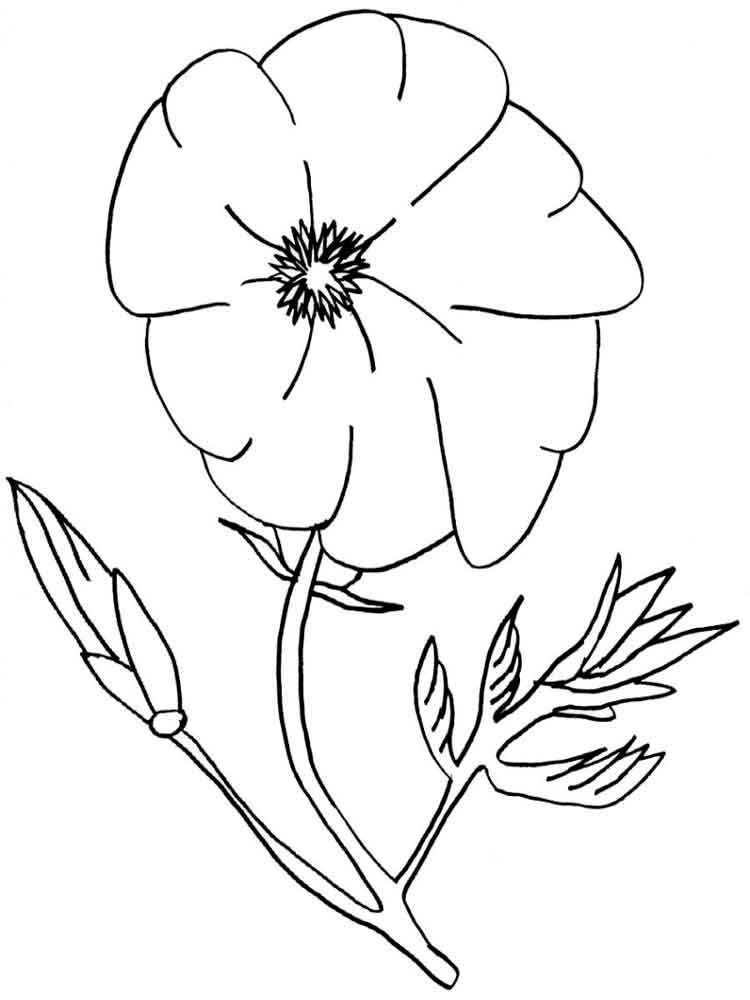 Poppy Flower Coloring Pages 12